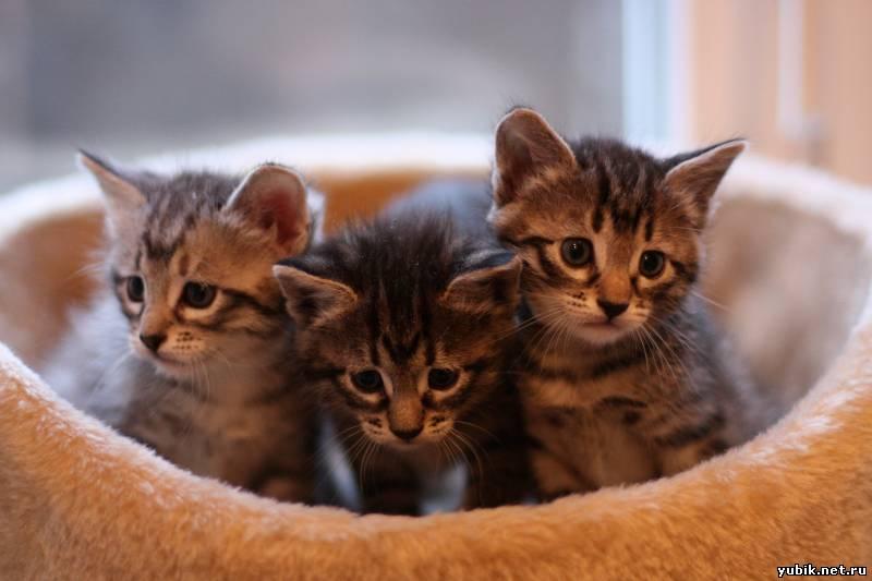 Фото серого полосатого котенка