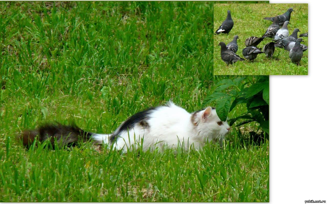 Cat ambush