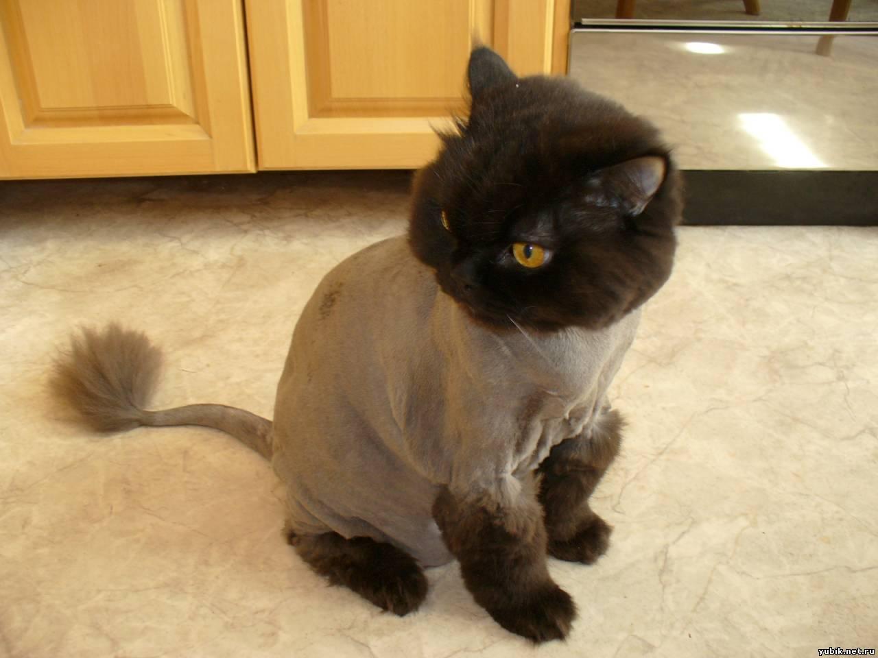 Как подстричь кота в домашних условиях : побрить самому, подстричь 61